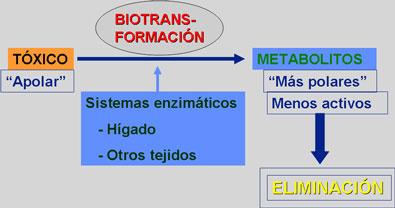 Figura N° 1: Representación De BioTransformación