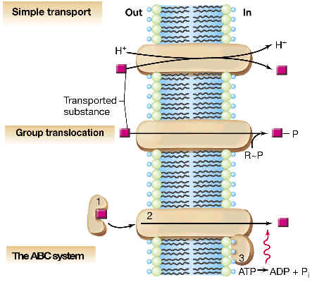 Transporte Simple, Traslocación de Grupo, Sistema ABC.