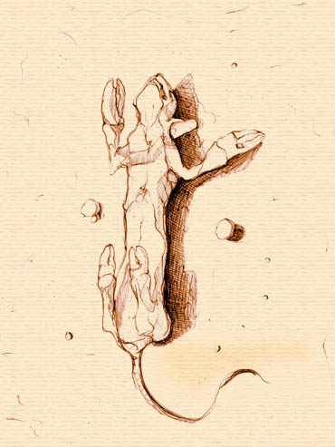 La cola de la colo - 3 8