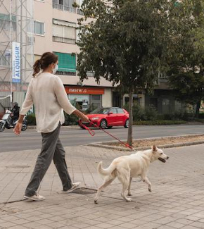 A girl walking her dog on the street