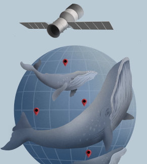 An image of a whale being tracked by a satellite