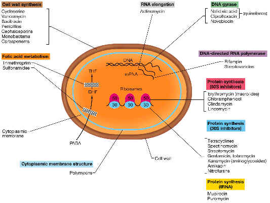 classification of antibiotics based on mode of action pdf